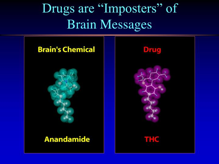 """Drugs are """"Imposters"""" of"""