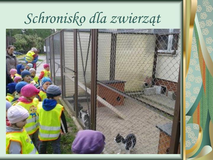 Schronisko dla zwierząt