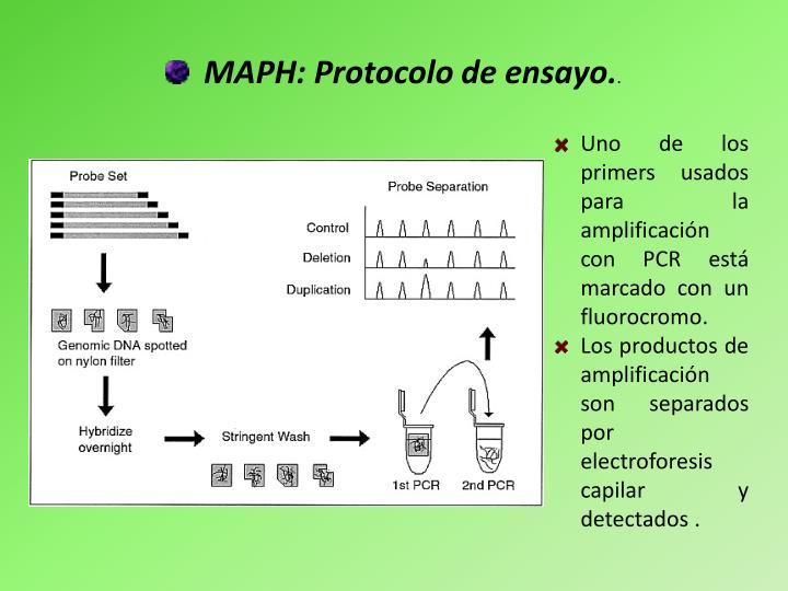 MAPH: Protocolo de ensayo.