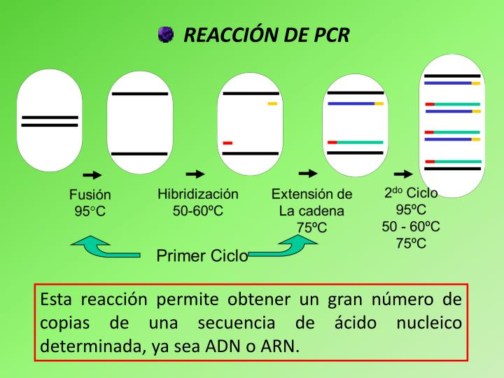 REACCIÓN DE PCR
