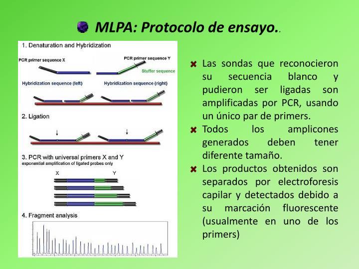 MLPA: Protocolo de ensayo.