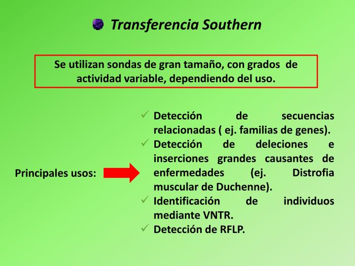 Transferencia Southern