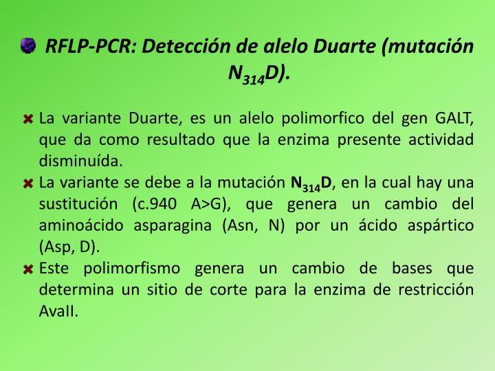 RFLP-PCR: Detección de alelo Duarte (mutación N