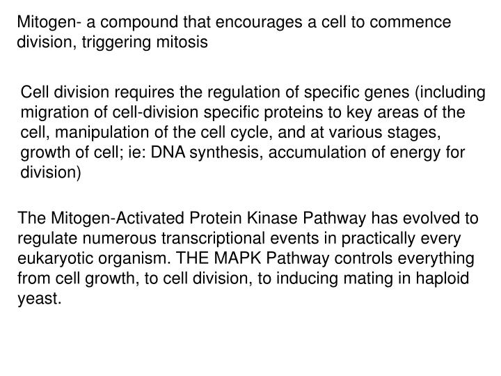 Mitogen- a compound that encourages a cell to commence division, triggering mitosis