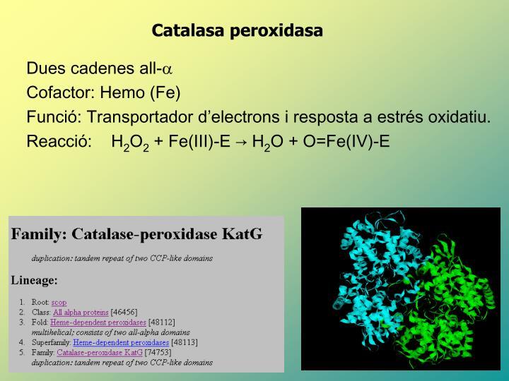 Catalasa peroxidasa