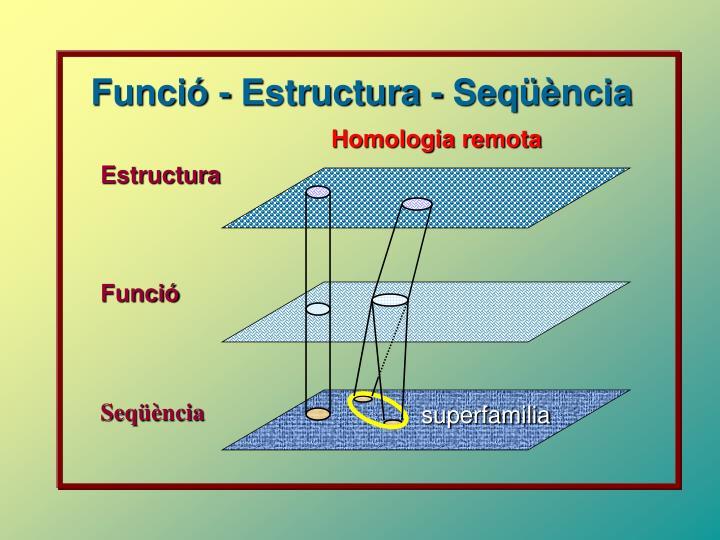 Funció - Estructura - Seq