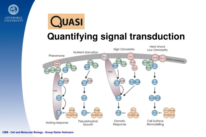 Quantifying signal transduction
