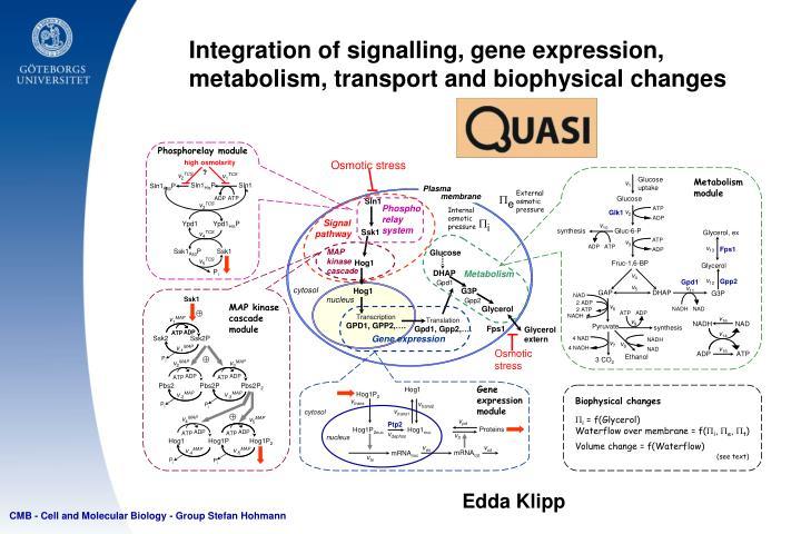 Integration of signalling, gene expression,