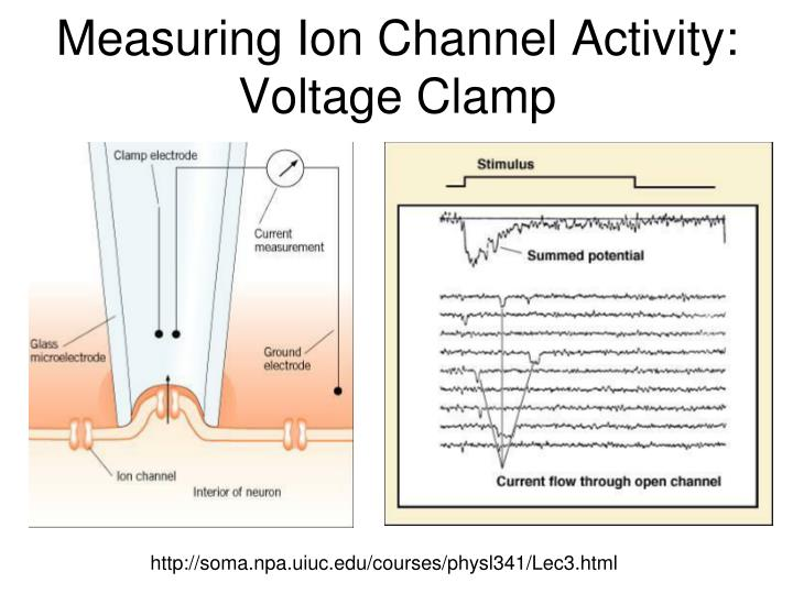 Measuring Ion Channel Activity: Voltage Clamp