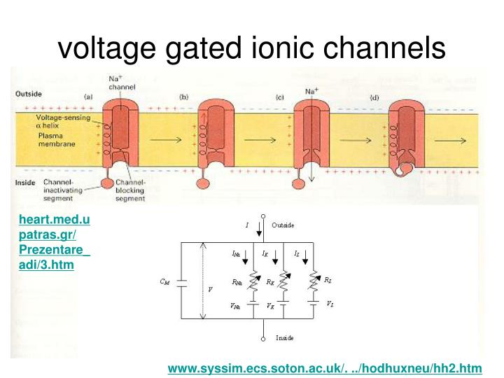 voltage gated ionic channels