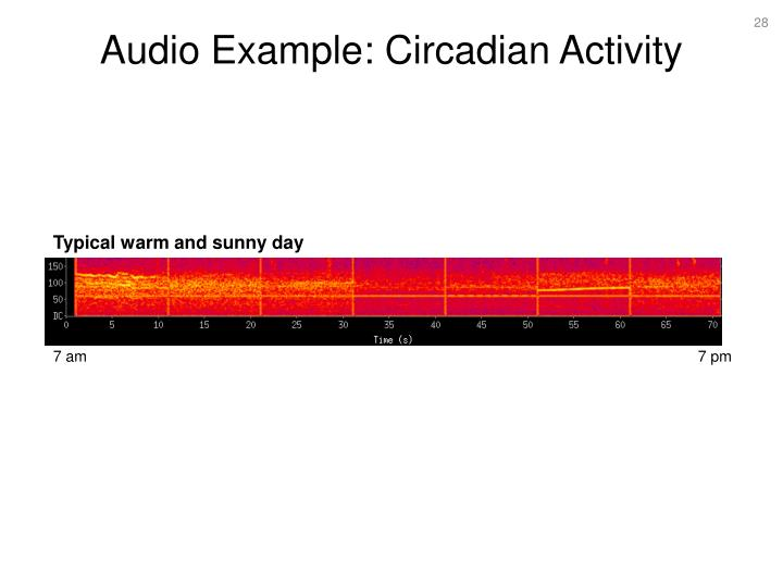 Audio Example: Circadian Activity