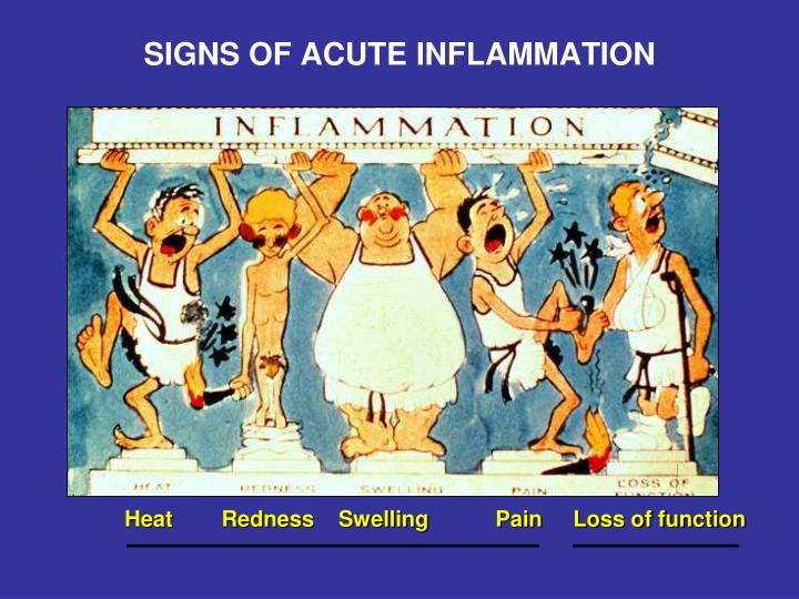 SIGNS OF ACUTE INFLAMMATION
