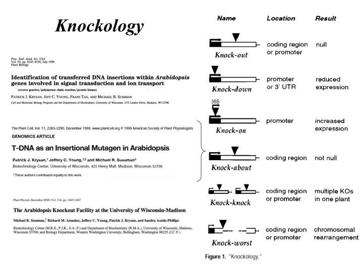 Knockology