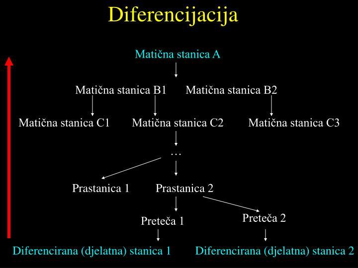 Diferencijacija