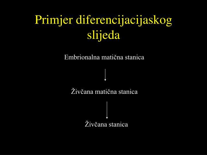 Primjer diferencijacijaskog slijeda