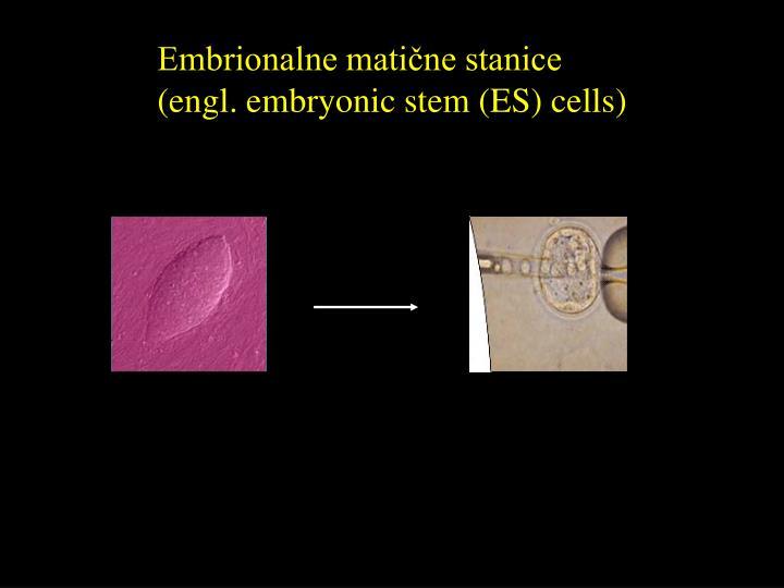 Embrionalne matične stanice