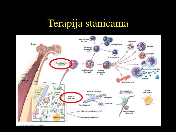 Terapija stanicama