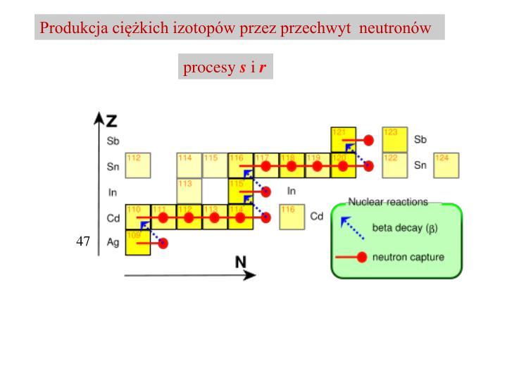 Produkcja ciężkich izotopów przez przechwyt  neutronów