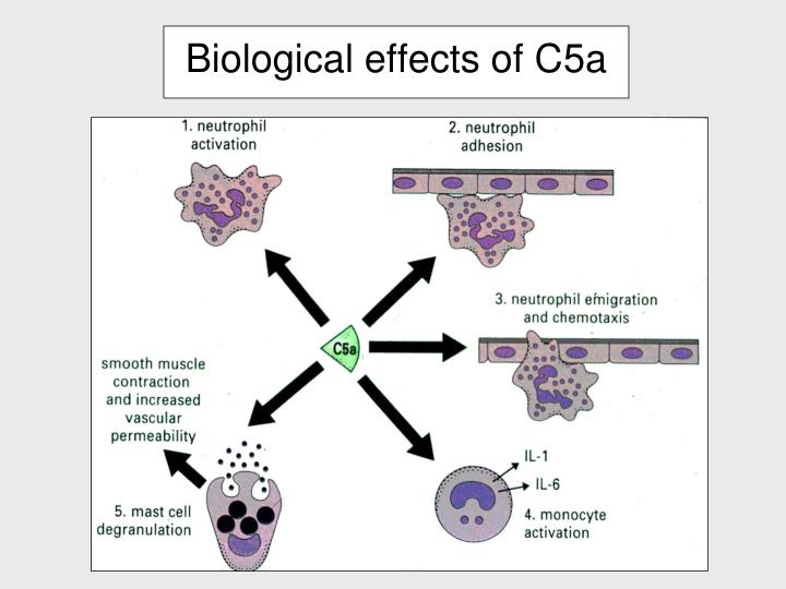 Biological effects of C5a