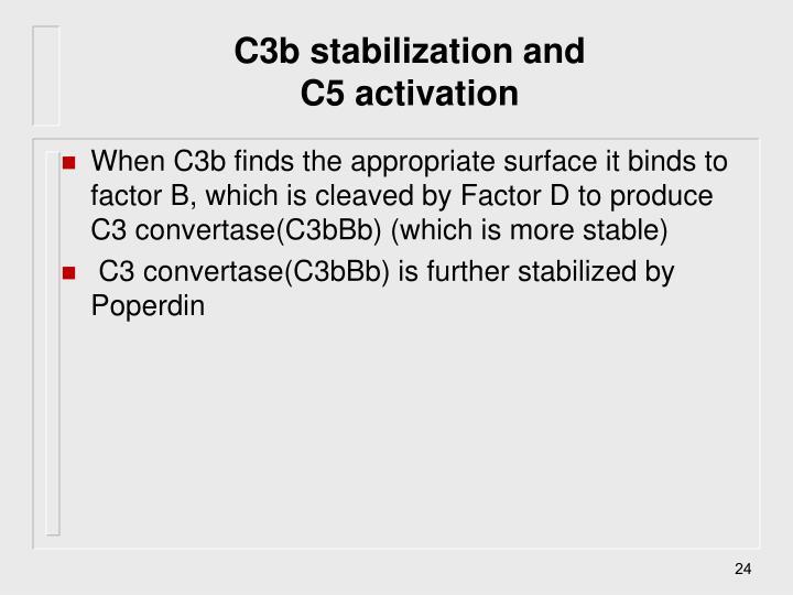 C3b stabilization and