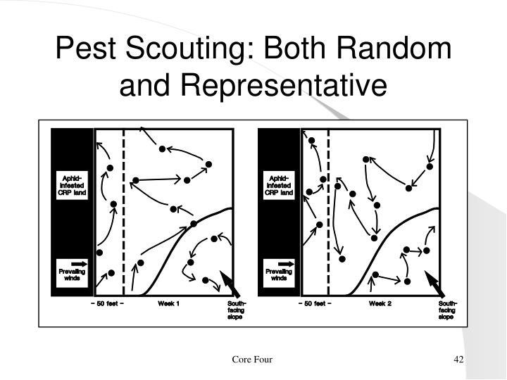 Pest Scouting: Both Random and Representative