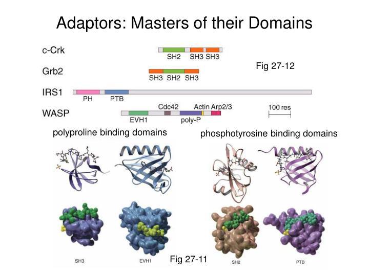 polyproline binding domains
