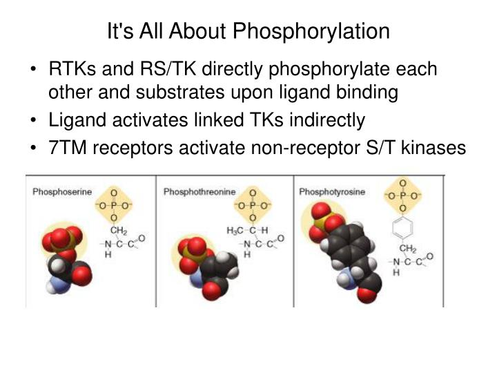 It's All About Phosphorylation