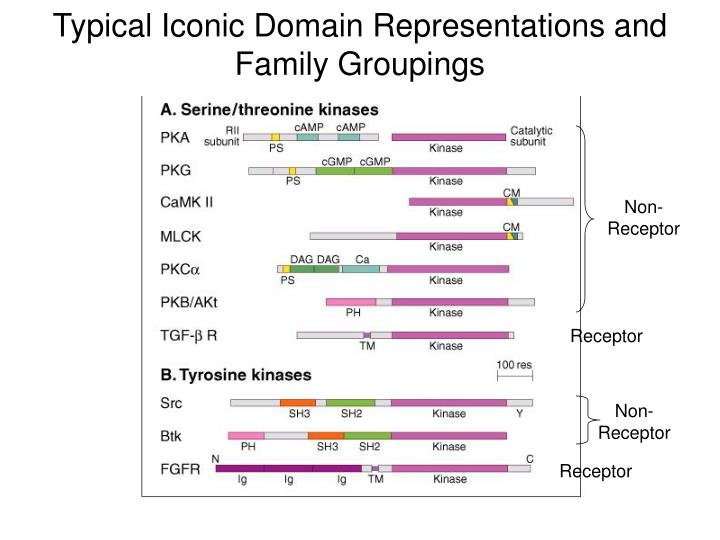 Typical Iconic Domain Representations and Family Groupings