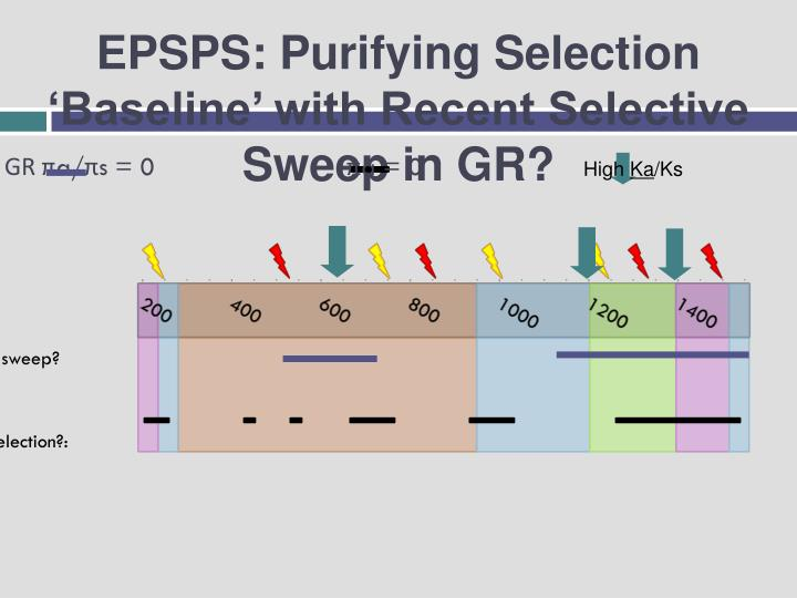 EPSPS: Purifying Selection 'Baseline' with Recent Selective Sweep in GR?