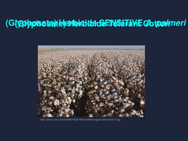 (Glyphosate) Herbicide Tolerant Cotton
