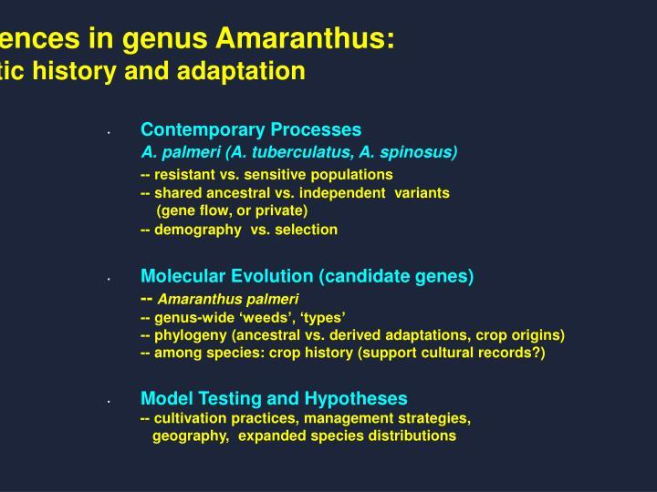 Use of DNA sequences in genus Amaranthus: