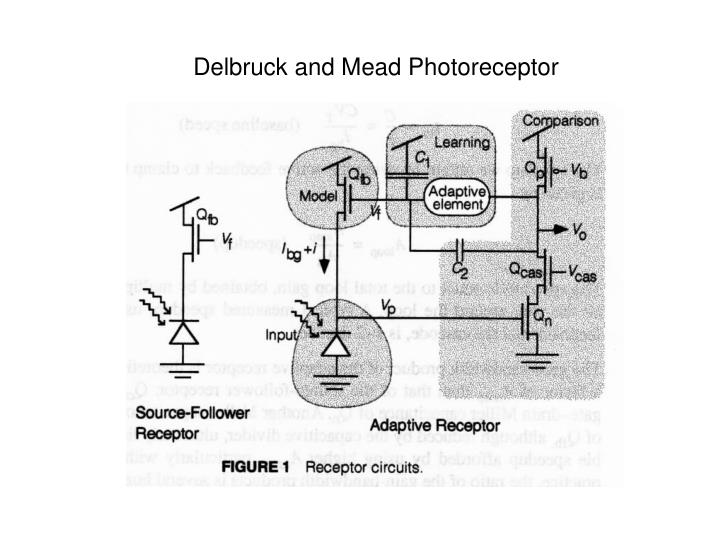 Delbruck and Mead Photoreceptor