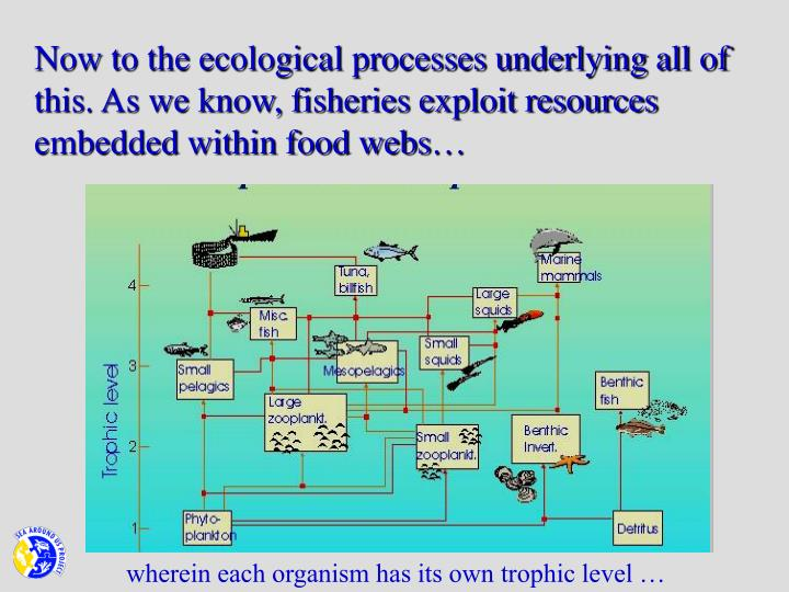 Now to the ecological processes underlying all of this. As we know, fisheries exploit resources embedded within food webs…