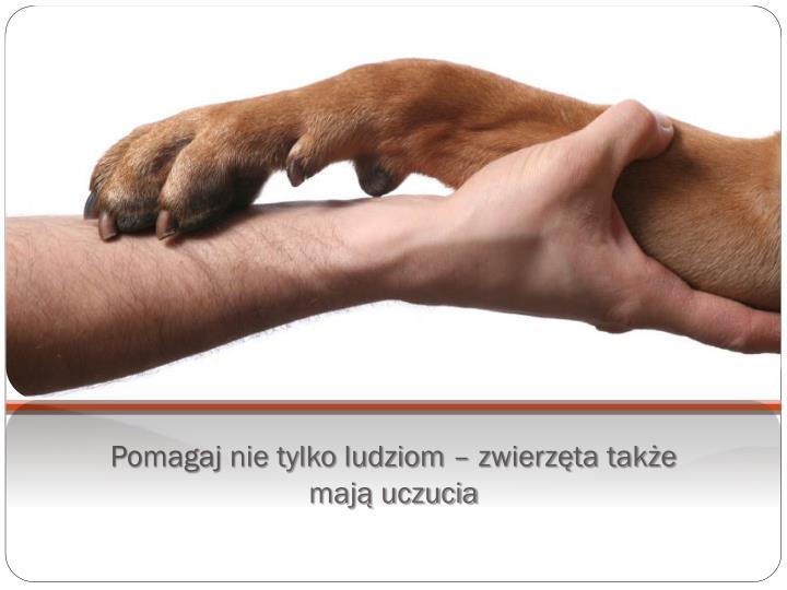 Pomagaj nie tylko ludziom – zwierzęta także mają uczucia