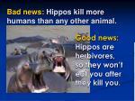 bad news hippos kill more humans than any other animal