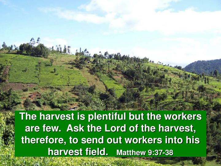 The harvest is plentiful but the workers are few.  Ask the Lord of the harvest, therefore, to send out workers into his harvest field.