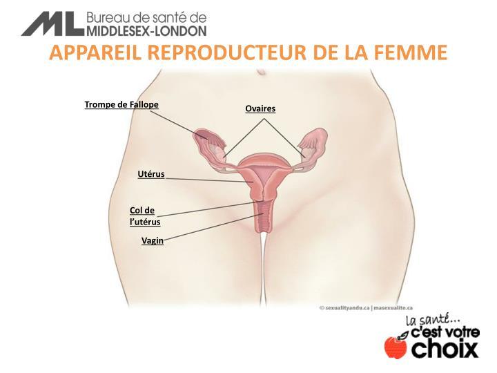 APPAREIL REPRODUCTEUR DE LA FEMME