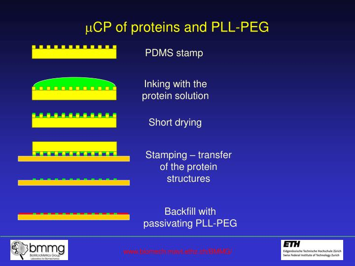 Cp of proteins and pll peg