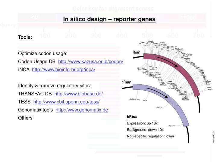 In silico design – reporter genes