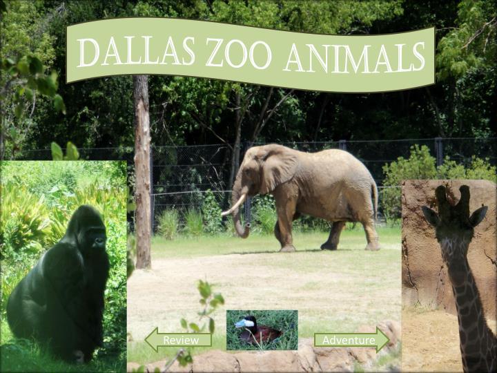 Dallas Zoo Animals