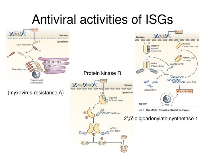 Antiviral activities of ISGs