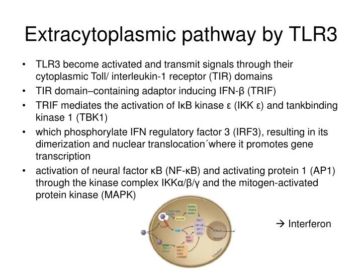 Extracytoplasmic pathway by TLR3
