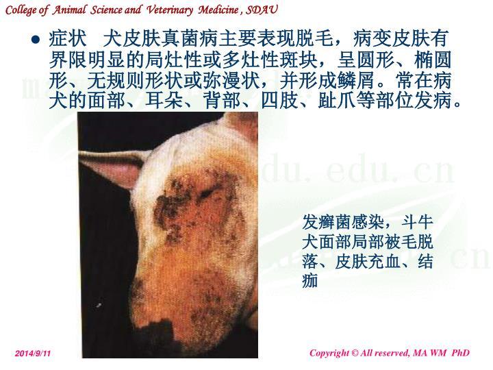 症状   犬皮肤真菌病主要表现脱毛,病变皮肤有界限明显的局灶性或多灶性斑块,呈圆形、椭圆形、无规则形状或弥漫状,并形成鳞屑。常在病犬的面部、耳朵、背部、四肢、趾爪等部位发病。