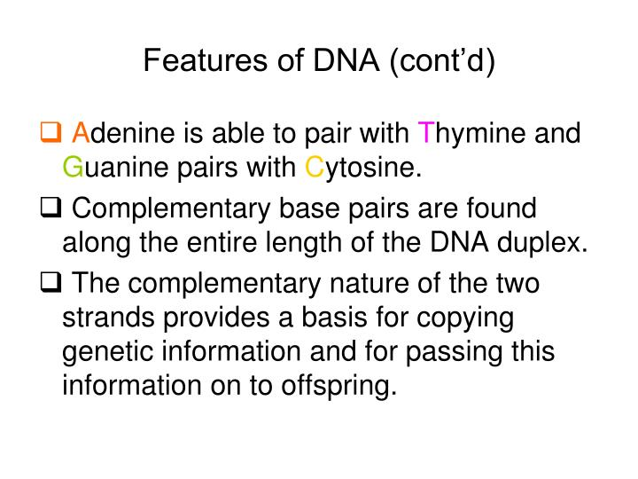 Features of DNA (cont'd)