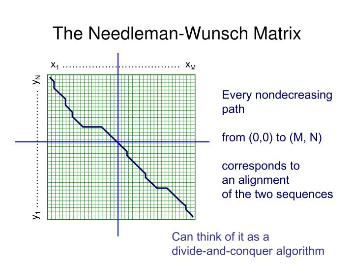 The Needleman-Wunsch Matrix