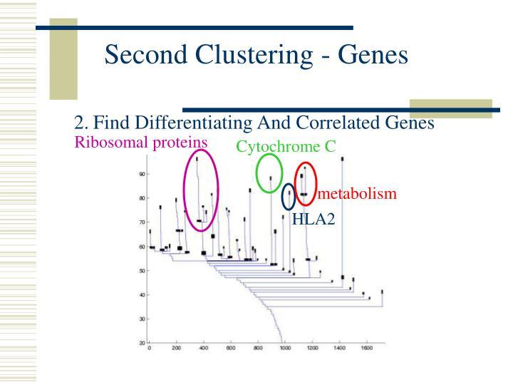 Second Clustering - Genes