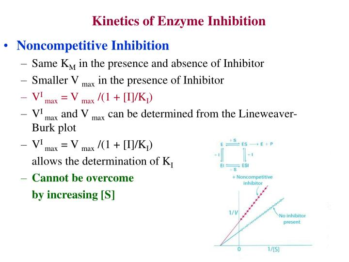 Kinetics of Enzyme Inhibition