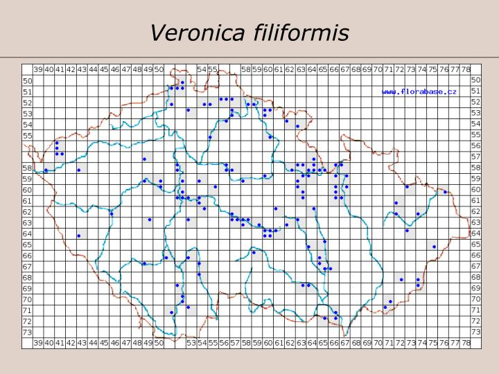 Veronica filiformis
