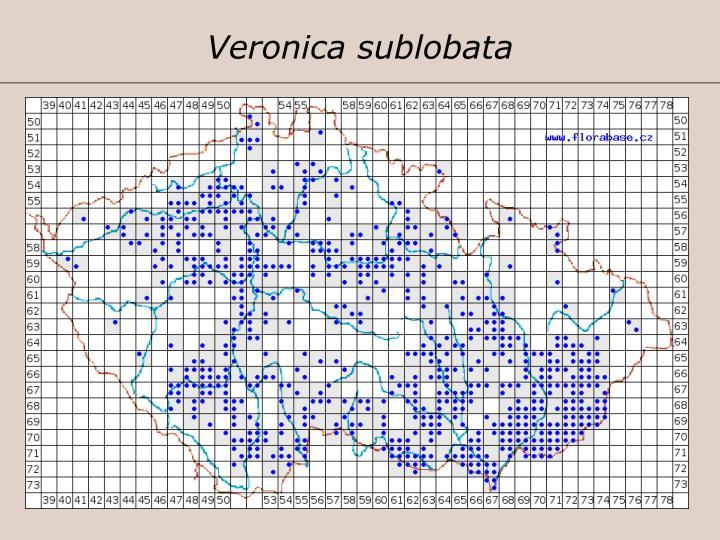 Veronica sublobata