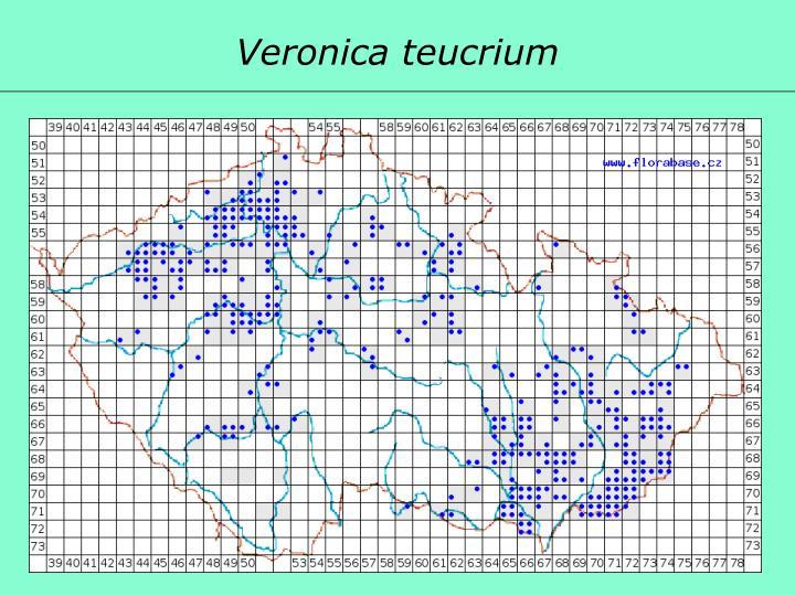 Veronica teucrium